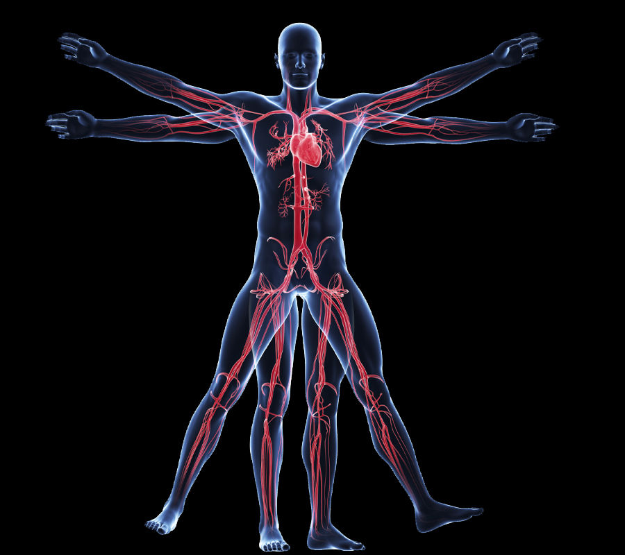 Introduction to the Basics of Anatomy and Physiology - eLearning